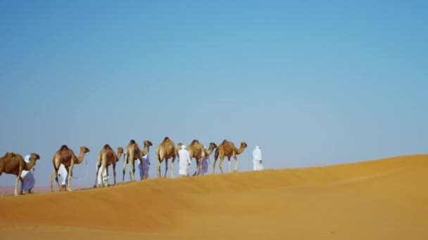 Bedouin males travelling camels in desert