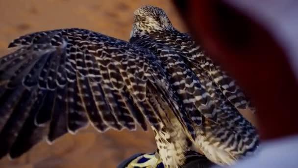 Falconer nel deserto con uccello rapace