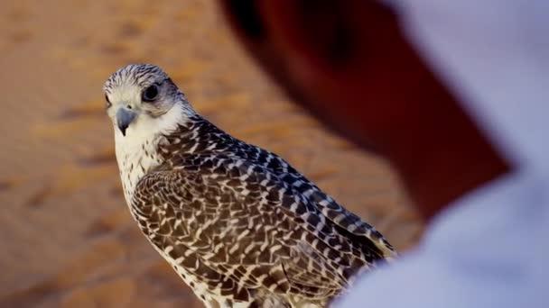 man with bird of prey standing on desert sands