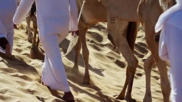 Camel caravan travelling across desert