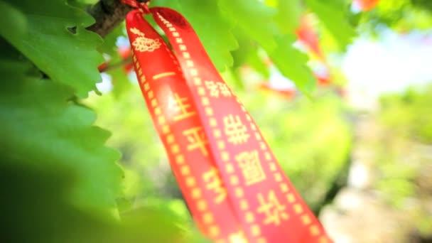 Wishing Tree Banyan of  happiness wealth and prosperity