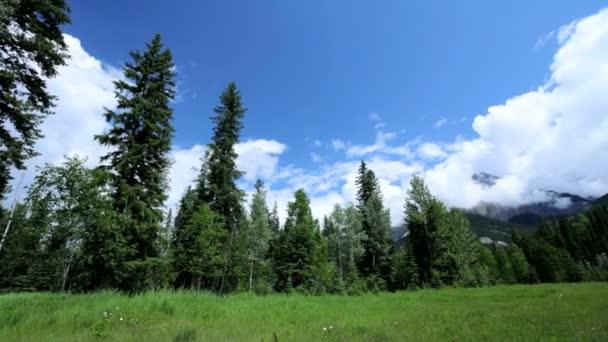 rich grasslands spruce forests