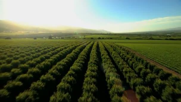 zemědělské krajiny a zemědělské plodiny