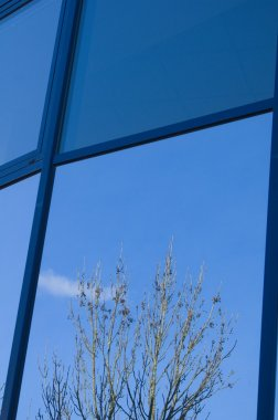 Trees reflect in glass building