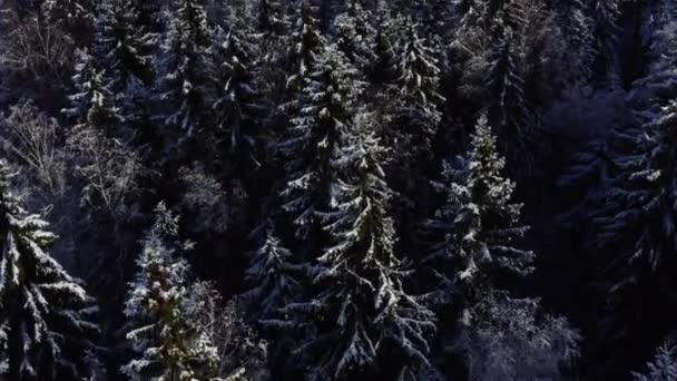 Luftaufnahme eines gefrorenen Waldes mit schneebedeckten Bäumen im Winter. Flug über den Winterwald, Blick von oben.