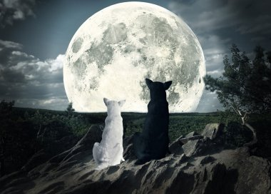 two dogs looking at the moon
