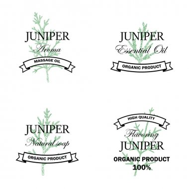 Juniper natural products logo set with hand drawn element isolated on white background. Vector illustration in vintage style icon