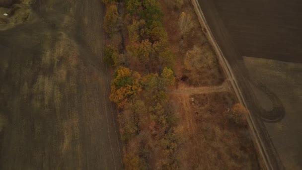 Letecký pohled na stromy v podzimní sezóně.