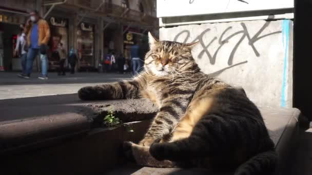 Legrační pouliční kočka spí a odpočívá na ulici v Istanbulu mezi lidmi.