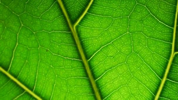 Makró hátterű levél. Zöld levél egy növény vagy fa textúra és minta közeli