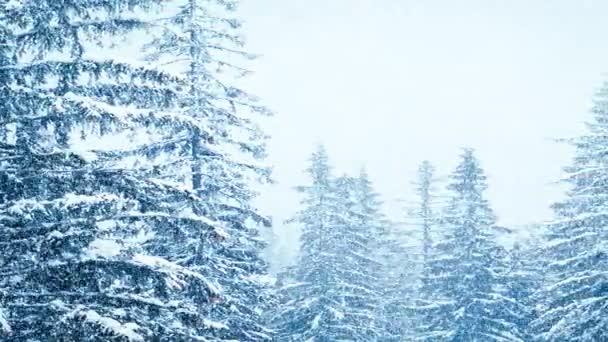 Sníh v zimě v lese, měkké zasněžené vánoční ráno s padajícím sněhem. Zimní krajina. Zasněžené stromy