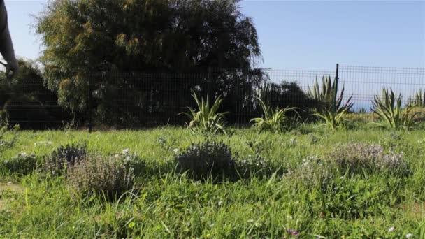 Okrasné zahradní nedávno vysazených záhon, herbicid postřik plevele