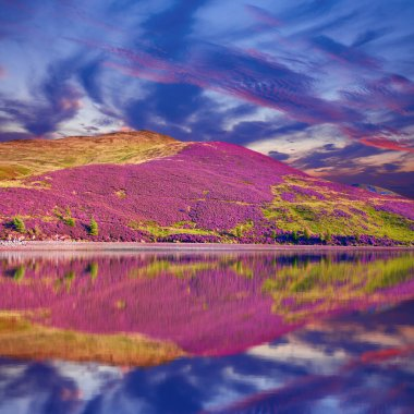 Colorful landscape scenery of Pentland hills slope covered by pu