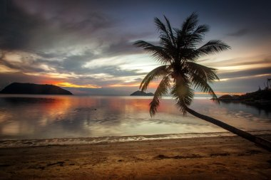 beautiful tropical landscape. Seashore and palm trees at sunset