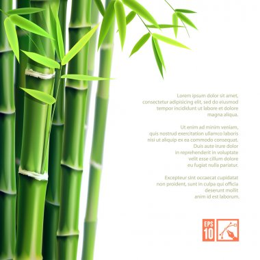 Bamboo Background. Vector illustration, eps10.