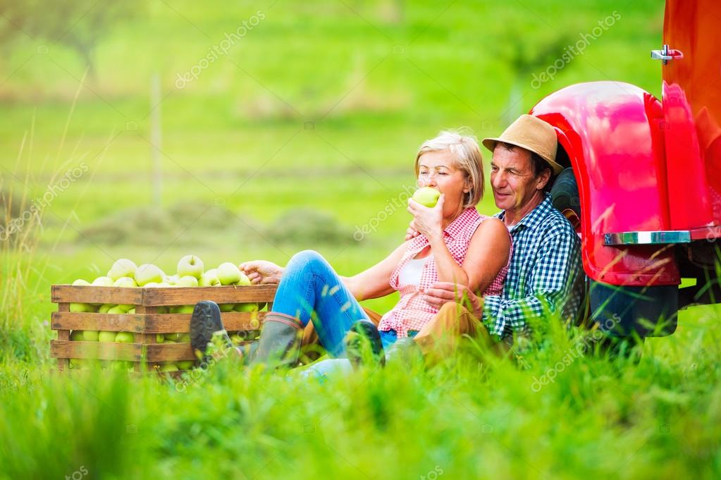 Senior couple harvesting apples