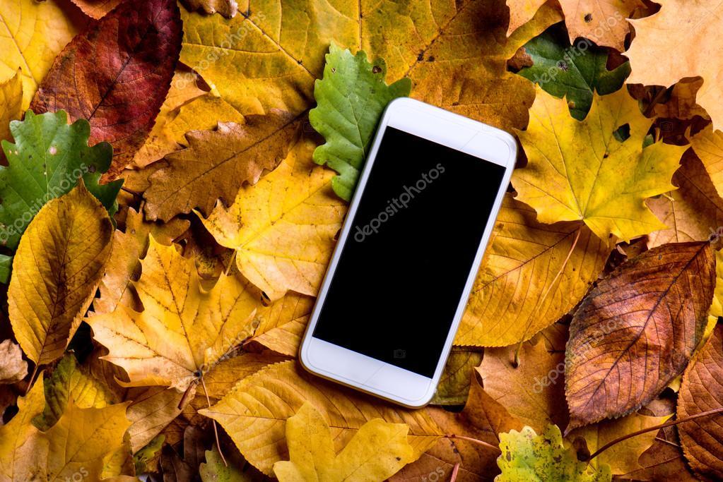 Autumn leaves and smart phone foto de stock halfpoint - Descargar autumn leaves ...