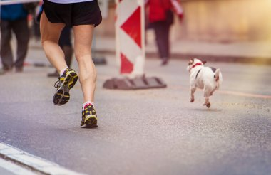 Runners and a dog at the city race