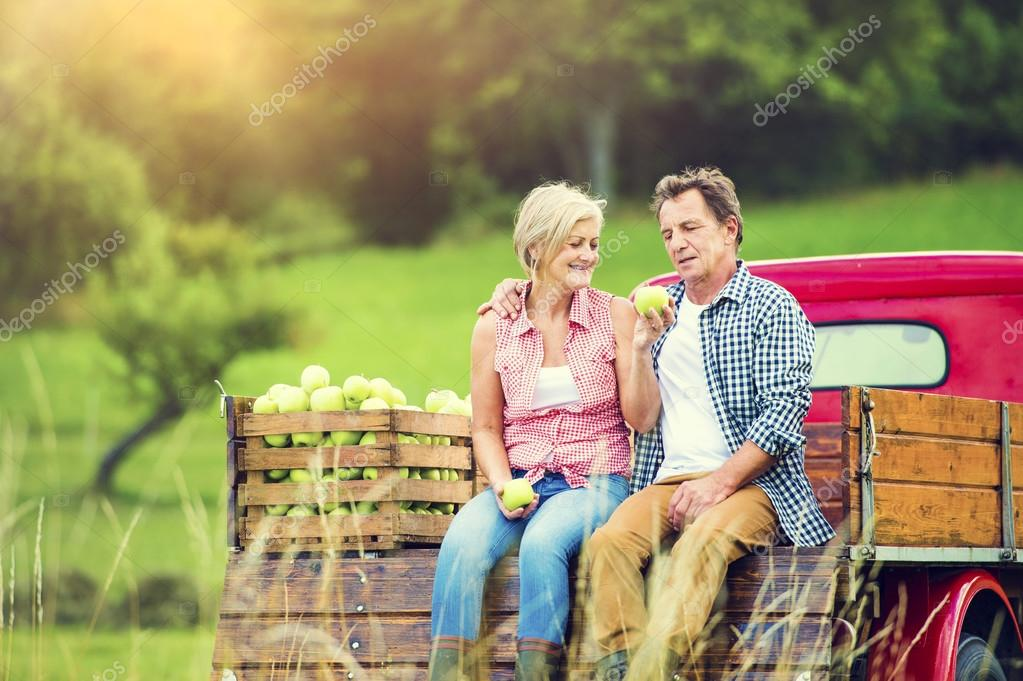 Couple harvesting apples