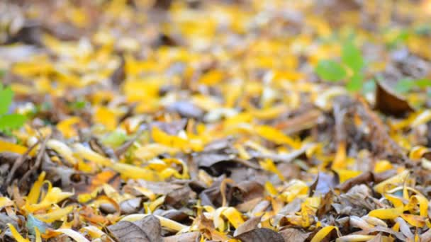 Yellow Blured Leafs With Focus Motion through the Scene