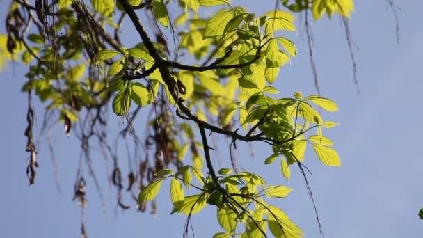 Zelené listy na jaře