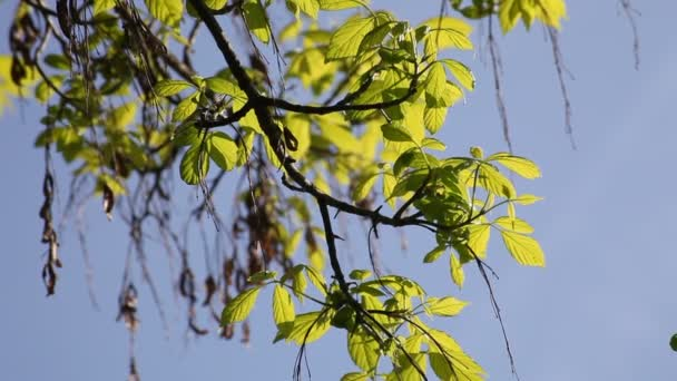 Fogliame verde a primavera