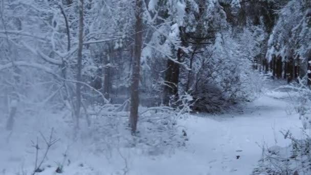 Hóval borított fák