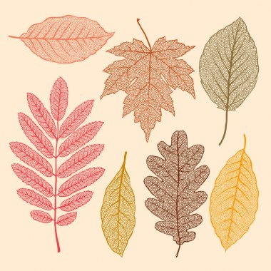 Autumn leaves, isolated dried leaves set, vector illustration.