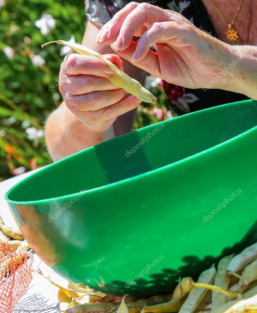 Plant De Menthe En Pot shell the romano beans and put the beans in a pot. — stock