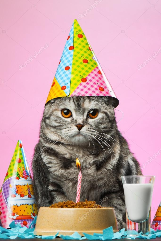 Geburtstag Katzen Auf Einem Rosa Hintergrund Stockfoto