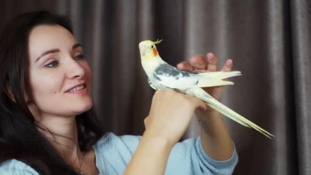 Papoušek Corella na stole se na sebe podívá do zrcadla. 4k