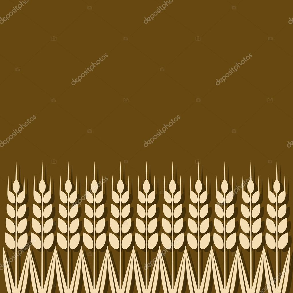 ripe wheat ears background