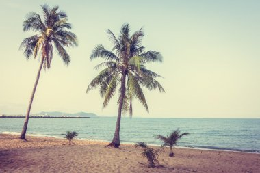 Coconut trees on beach