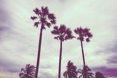 Vintage palm tree