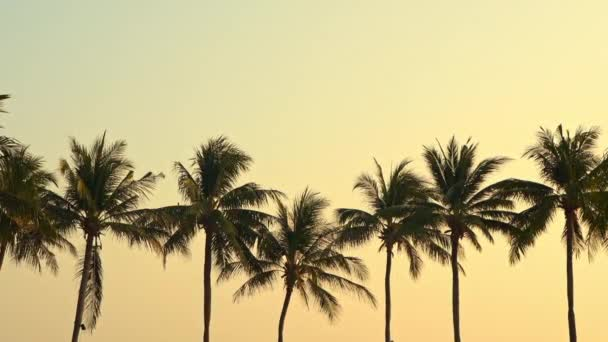 close-up footage of beautiful palm trees on sky background