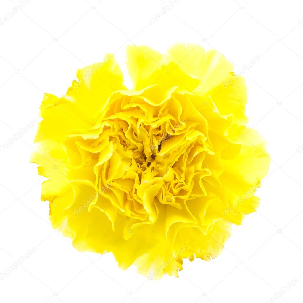 Yellow carnation flower stock photo mrsiraphol 60995379 yellow carnation flower stock photo mightylinksfo