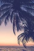 silueta Palma