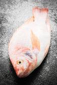 Fényképek Nyers tilápia friss hal