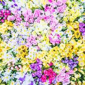 gyönyörű színes virágok