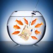 Fotografie Fisch-Versuchung-Konzept