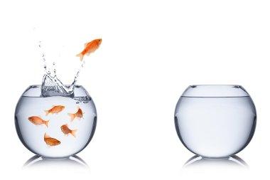 fish escape