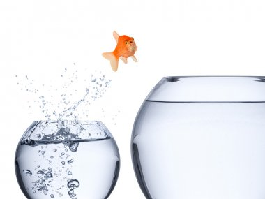 fish rise concept