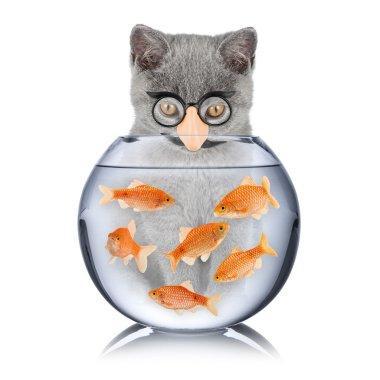 smart cat fish concept