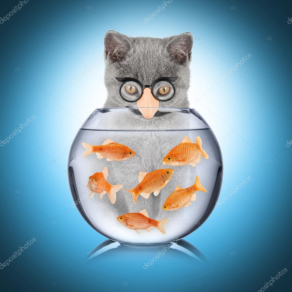 fisk till katt