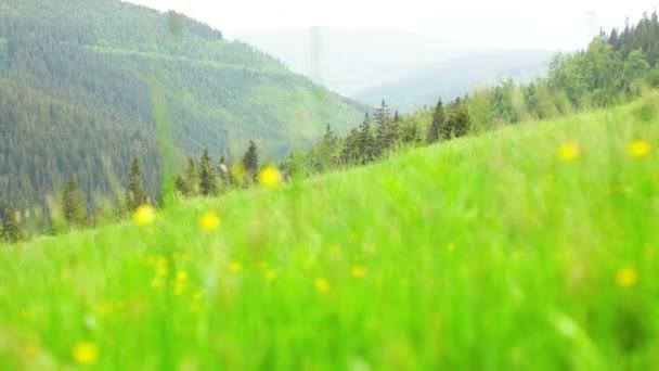 Čerstvě dospělé zelené travnatá pole
