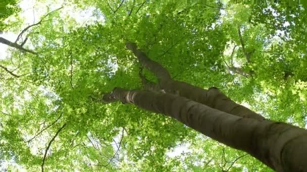 hoch oben abgewinkelte Perspektive für Baumkrone