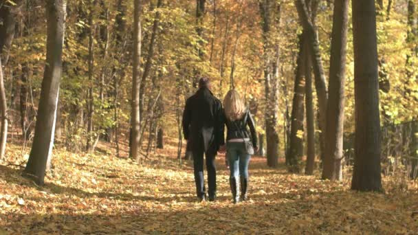 podzim v lese