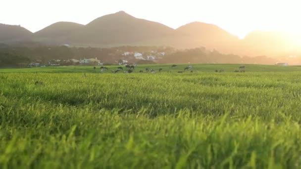 Nízký hranatý Shot Farmfield