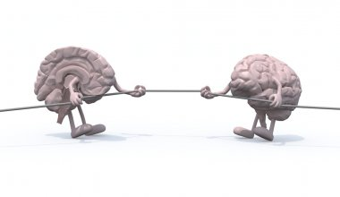 two half brains tug of war rope