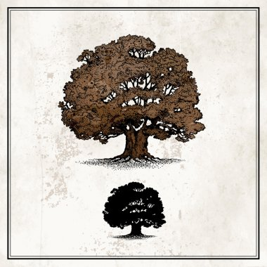 Oak tree isolated on light background stock vector